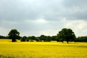 fields-001